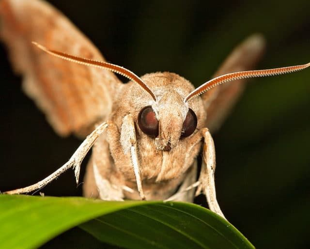 A woman choked on a moth and almost died.