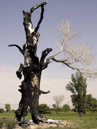 Deysi Zapata y Luna Avinceto acaban de morir fallecieron en un trafico árbol quemado
