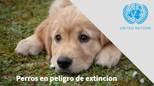 Dogs will become extinct on June 19 2021 said by the UN